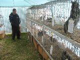 Ausstellung der Kleintierzüchter